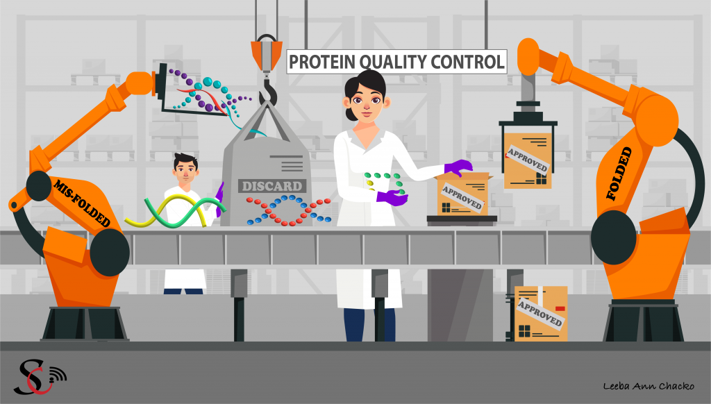 Protein quality control: Segregation of folded and misfolded proteins